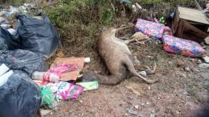 46 bangkai rusa dari kandang tercampak jauh